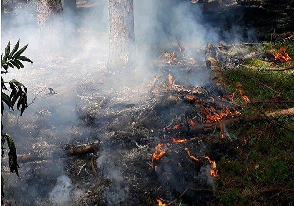 عکس خبري -خانه ملت به داد جنگلها برسد