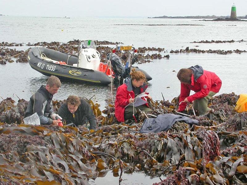 عکس خبري -کشف جلبک بازمانده از عصر يخبندان در سواحل بريتانيا
