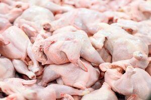 عکس خبري -يارانه ?.? ميليارد دلاري براي توليد گوشت مرغ کجا رفت؟