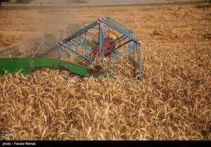 عکس خبري -ضرر ???? توماني کشاورزان در توليد هرکيلو گندم/چرا دولت در تشکيل شوراي قيمتگذاري وقتکُشي ميکند؟