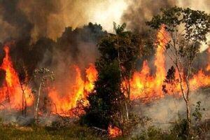 عکس خبري -ارتباط ميان دود آتشسوزي با ابتلا به کرونا