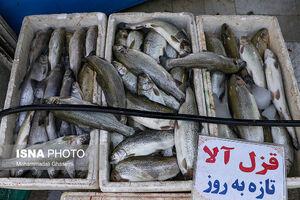 عکس خبري -چرا ماهي گران شده است؟